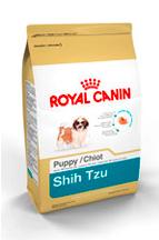 ShihTzu_puppy