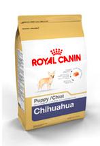 chihuahua_pupy
